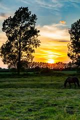 "Denver Sunset (Bruce Poole) Tags: denver norfolk summer verano estio ete estate sommer sky heavens cielo cielos ciel cieux lutraum himmel ουρανόσ sunset sundown dusk ""puesta du sol"" anochecer crepuscule ""coucher soleil"" tramonto alba ""spuntar del sole"" sonnenuntergang brucepoole 2017 eastofengland eastanglia clouds nuvola nube cloud nuage nuees nuages wolk ""定义"" ""英语同义词"" ""上下文""图像"" cloudscape"