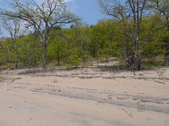 Transition (geodeos) Tags: westmeathprovincialpark ottawariver beach sand forest tree landscape scenery nature