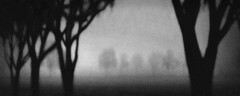 Trees in Fog in Winter...Zamora (Rick Exstrom) Tags: rickexstrom blackandwhite fineart dark mysterious fog winter panorama california texture grain