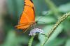 Life ♥ (Janne Fairy) Tags: bokeh dof canon500d eos500d nature natur butterfly schmetterling depthoffield depth field schärfentiefe insect insekt flower orange eye auge