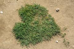 SUR LES CHEMIN DU CAP BLANC-NEZ (daumy) Tags: coeur message chemin herbe nature caillou vert