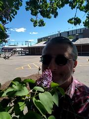 Smelling the Lilacs (Bracus Triticum) Tags: smelling lilacs self 5月 五月 早月 gogatsu satsuki fastmonth 2017 平成29年 summer may calgary カルガリー アルバータ州 alberta canada カナダ