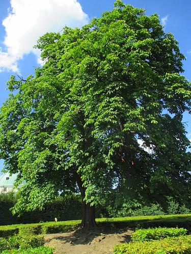 Strom uprostřed bludiště