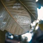 Spider Mites thumbnail