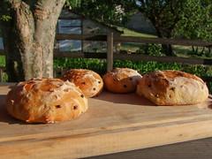 Pain hérisson (Grand-Pappà...) Tags: pain pa pan bread auvergne hauteloire hautesterres lobeç margeride marjarida massifcentral fabricationmaison