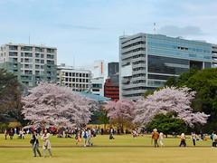 Park Life (Douguerreotype) Tags: japan tokyo shinjuku cherry blossom park cherryblossom sakura tree buildings people city urban pink