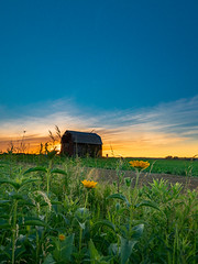 Buttercups and Barn (Explore 6.22.17) (MacDonald_Photo) Tags: jamieamacdonald sl33stak zd lightroom oly olympus zuiko eatonrapids michigan getolympus omd omdem1mkii μ43photography μ43 em1mkii omdem1markii barn flower wildflowers sunset summersolstice blueskies rural ruralmichigan puremichigan mzuiko714mmf28pro 714mm nisi nisireversegraduatedneutraldensityfilter reversegrad nisiglobal vanguardphoto vanguardveo