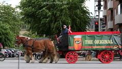 ... just like 100 years ago ... (ChristianofDenmark) Tags: copenhagen christianofdenmark denmark summer horses beer heavyhorses