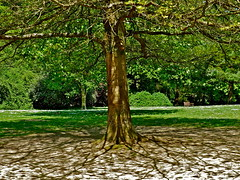 Tree shadows and bench (jeansmachines24) Tags: tree shadows light pattern trunk central may2017 clyne bench