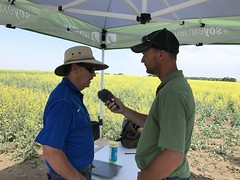 IMG_1604 (AgWired) Tags: bayer cropscience showcase plot tour 2017 soybeans canola wheat cereals corn north dakota agwired zimmcomm new media chuck zimmerman