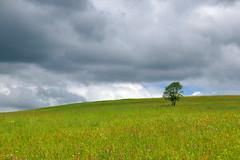 Meadow & clouds (radimersky) Tags: landscape krajobraz tree meadow łąka clouds chmury lonely meadowland samotne dzień day czechrepublic orlickehory góryorlickie lumix dmclx100 lx100 panasonic micro 43 fourthirds 3840x2560 widok drzewo neratov europa europe czechy orlickémountains adlergebirge eaglemountains