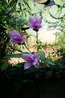 960707@桃園‧莫內的花園