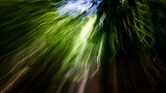 Breach ([Alan]) Tags: intentionalcameramovement icm woods trees forest east germany buchenwald