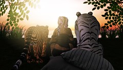 A quiet moment with my Wild Kajaera Second Life cats (Beautiful Braveheart) Tags: secondlife sl wkwildkajaera wildkajaera wkcats wildkajaerasecondlife whitefur jager whitetiger breedable bigcat beautifulbraveheart bigcats sunset pigtails pet