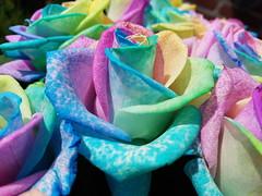 20170630_160110 (Daniella Velings) Tags: rainbow colourful roses artificiallycoloured multicolored flowers bloemen kleurrijk photography regenboog beautiful mooi rozen rainbowcolouredroses