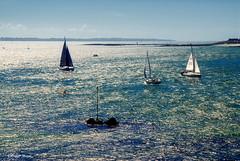 Voiliers en contre-jour (didier95) Tags: voilier mer bateau bleu bretagne contrejour
