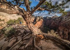 Cling (Lightcrafter Artistry) Tags: nationalpark zionnationalpark zion utah travel cliff angelslanding hike climb rocks