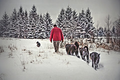 Winter Walk (LupaImages) Tags: man dogs winter snow cold february white nature rural