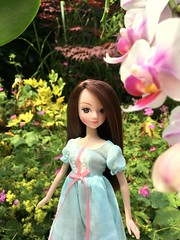 There's the morning sun (dolldudemeow24) Tags: kurhn 江南女孩ⅱ jiangnan girl ⅱ doll chinese china blue dress flowers morning garden plants 2017