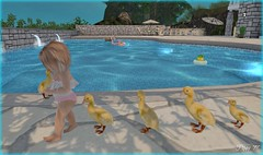 Ducks in a row.. (poppydouglas) Tags: tinytrinkets bebe tinygems barberyumyum