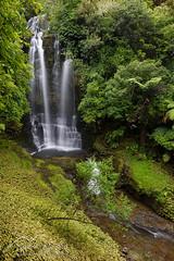 Waitanguru Falls (Neil Fitzgerald Photography) Tags: newzealand waikatoregion waitomodistrict forest landscape water waterfall nzl