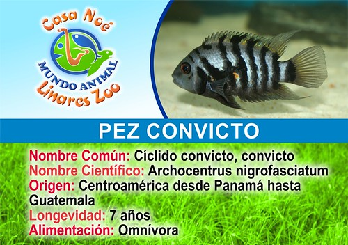 pez convicto
