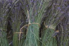 Bouquets de lavandin (Pi-F) Tags: provence france lavandin lavande bleu fleur botte bouquet ficelle vert