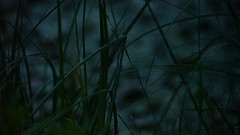 (anjamation) Tags: lake unaltered darkness darkgreen july 2017 vegetablekingdom ghostly otherworldly green forrest forceofnature ilce7m2 sonya7ii sonyfe24240mmf3563oss thewild nature theoldworld 169