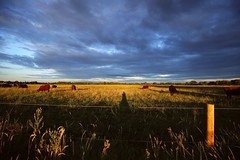 (sarahwilson-blackwell) Tags: canon6d boating thames agriculture rural farming kingslock oxfordshire countryside bucolic