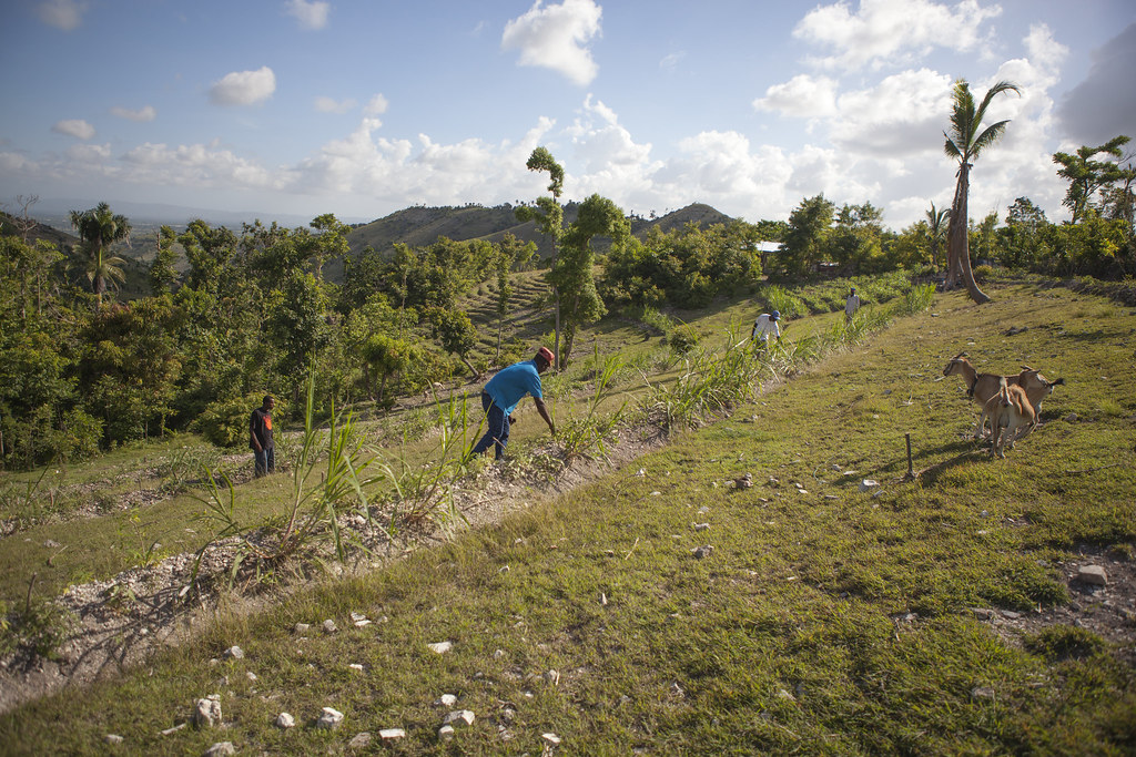 AVSF-HAITI-2017-TRISTANPARRY203