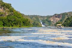 (mdiec) Tags: africa uganda murchison kabalega falls nile river wildlife safari savannah elephant hippo giraffe