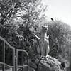 Hausdrache (Rene'D.) Tags: 2017 80mm amrum hasselblad trix400 kodak trix analog analogue film bw bnw monochrome schwarzweiss north wadden sea schleswigholstein germany island dragon virago sculpture skulptur adox adonal rodinal