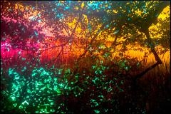 20170605-080 (sulamith.sallmann) Tags: gewässer natur pflanzen baum blur bunt bäume colorful effect effekt filter folientechnik lake nature plants see tree unscharf wasser waters brandenburg deutschland deu sulamithsallmann