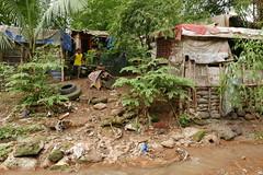 bridge community (DOLCEVITALUX) Tags: underthebridge bridgecommunity people philippines life lumixlx100 panasoniclumixlx100 river water stream animals outdoor house shanty shanties