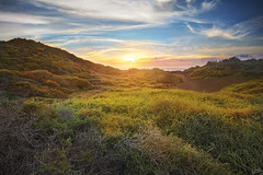 Dunes at Playa del Inglés (johaennesy) Tags: hdr hdri luminancehdr highdynamicrange lagomera playa canaries canaryislands islascanarias opensourcesoftware sunset beach dunes bushes sonyalpha sony a580 rawtherapee gimp vallegranrey
