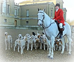 Master of the Hunt & hounds at Holkham Hall, 22 Dec 2016 (Janna...) Tags: holkhamhall wnfh westnorfolkfoxhounds trailhunt hunting equines canines
