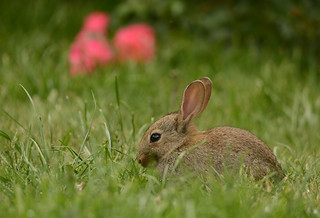 Baby bunny 💗