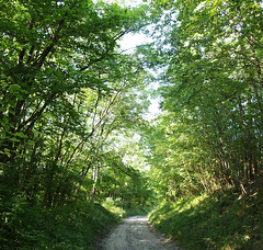 Green path (ekaterina alexander) Tags: green path tree trees summer ekaterina england alexander sussex nature photography pictures wood woodland