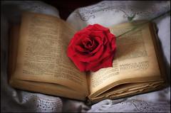 El valor de cada una de nuestras páginas - Amparo García Iglesias (Amparo Garcia Iglesias) Tags: articulo revista grada el valor de cada una nuestras páginas libro rosa red rojo aprendizaje psicología fotos photos amparo garcia iglesias la esquina del pensamiento