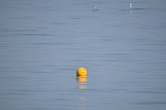 Hastings 2 June 2017 004 (paul_appleyard) Tags: hastings sussex june 2017 buoy 8 knots buoyant