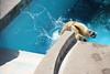 水族館7 (ののリサを信じろ) Tags: 水族館 白熊 カエル 蛙 シロクマ なまはげ 獅子舞 神社 桜 鯉のぼり アシカ