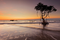 (Louise Denton) Tags: tree mangrove sunset silhouette ocean water sea darwin tropical australia nt