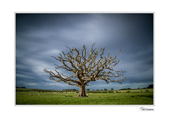 5D4_3874 (Paul Compton (PDphotography)) Tags: landscape sky tree country countryside wales north photography old oak