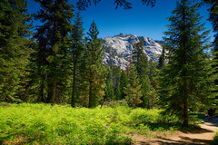 Nice sunny day at Sequoia National Park (designcover2006) Tags: forest sequoia trees nice ca sony zeiss carl natire