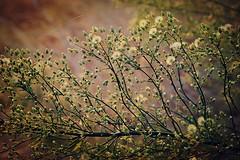 Sevelim, sevilelim... (halukderinöz) Tags: bitki plant yunanistan greece canoneos40d eos40d hd