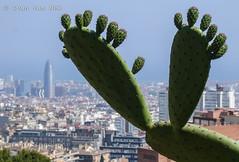 Two feet above Barcelona... (Ivan van Nek) Tags: parkgüell barcelona spanje spain spanien españa espagne catalonia cataluña catalunya sonydscv3 sony v3