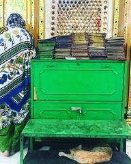 The Cat of Hazrat Nizamuddin Auliya at His Sufi Shrine in Delhi (Mayank Austen Soofi) Tags: delhi walla the cat hazrat nizamuddin auliya his sufi shrine