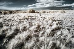([ raymond ]) Tags: infrared landscape newmexico santafe img5731edit