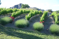 Vignoble en montagne (RarOiseau) Tags: hautesalpes châteauvieux montagne campagne vignoble vert saariysqualitypictures ombre lumière v2500