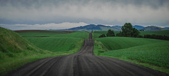 Drive (Pedalhead'71) Tags: palouse drive road landscape washington unitedstates us whitman